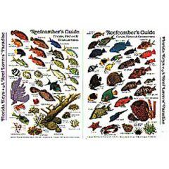 Reefcomber's Guide Tropical Atlantic & Caribbean Fish Card