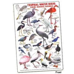 Tropical Water Birds Florida, Bahamas & Caribbean Fish Card
